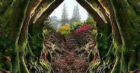 secret garden in redwood regional park.j