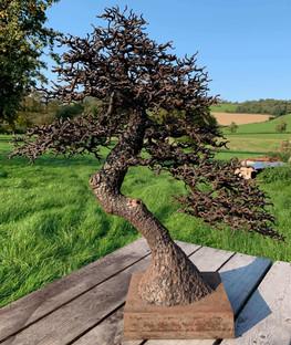 The Omiya Pine