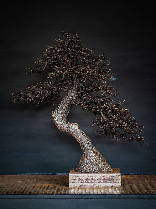 Omiya Pine