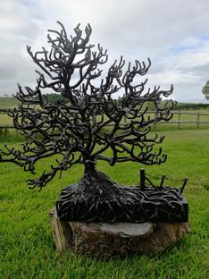 John Farr Oak