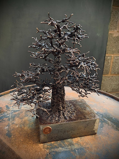 Little Oak
