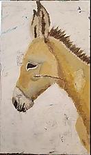 An Israeli donkey