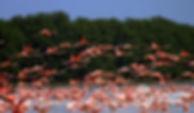 Celestun-flamingos.jpg