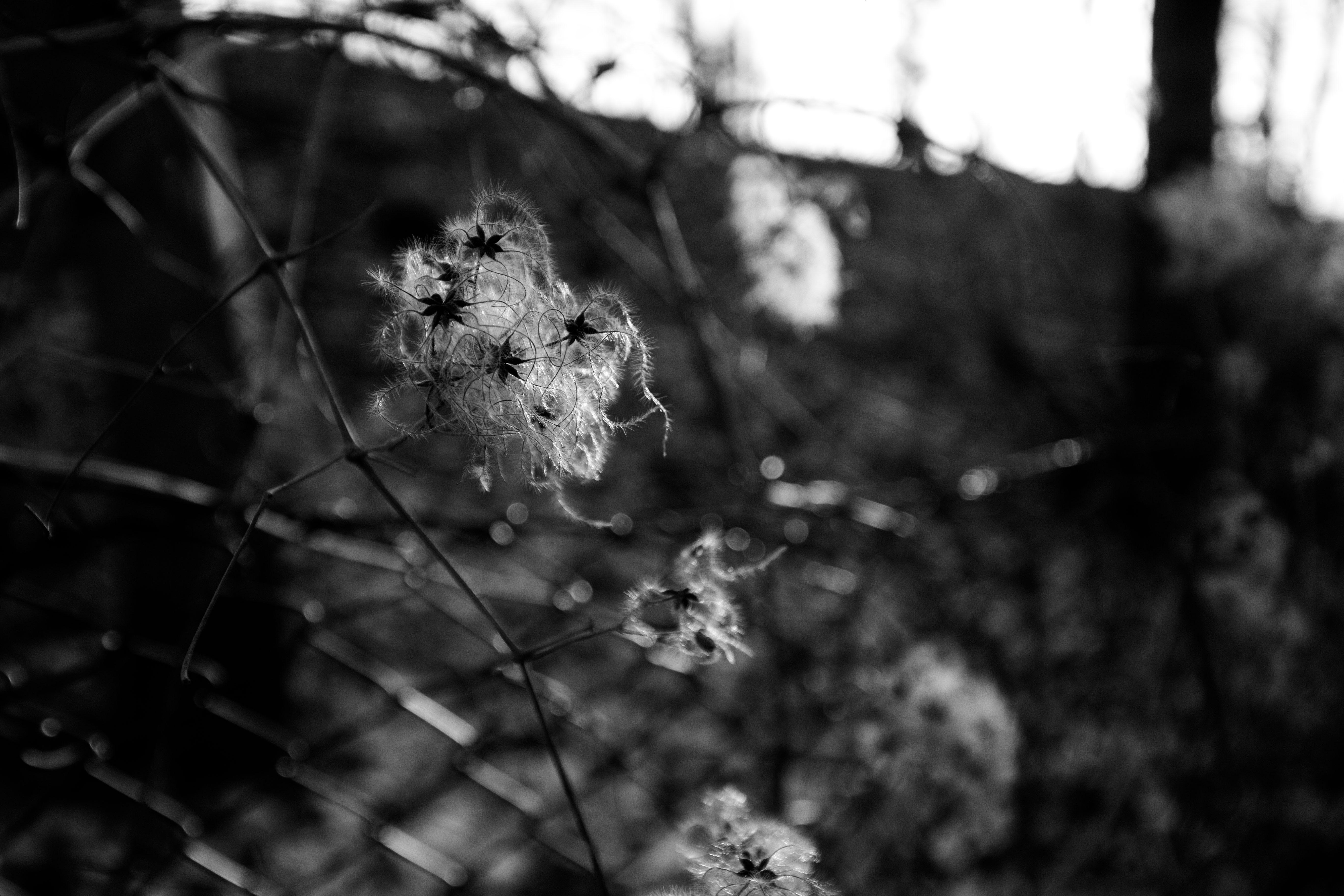 stars_on_a_tree_6366