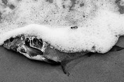 fish_and_the_sea_3489