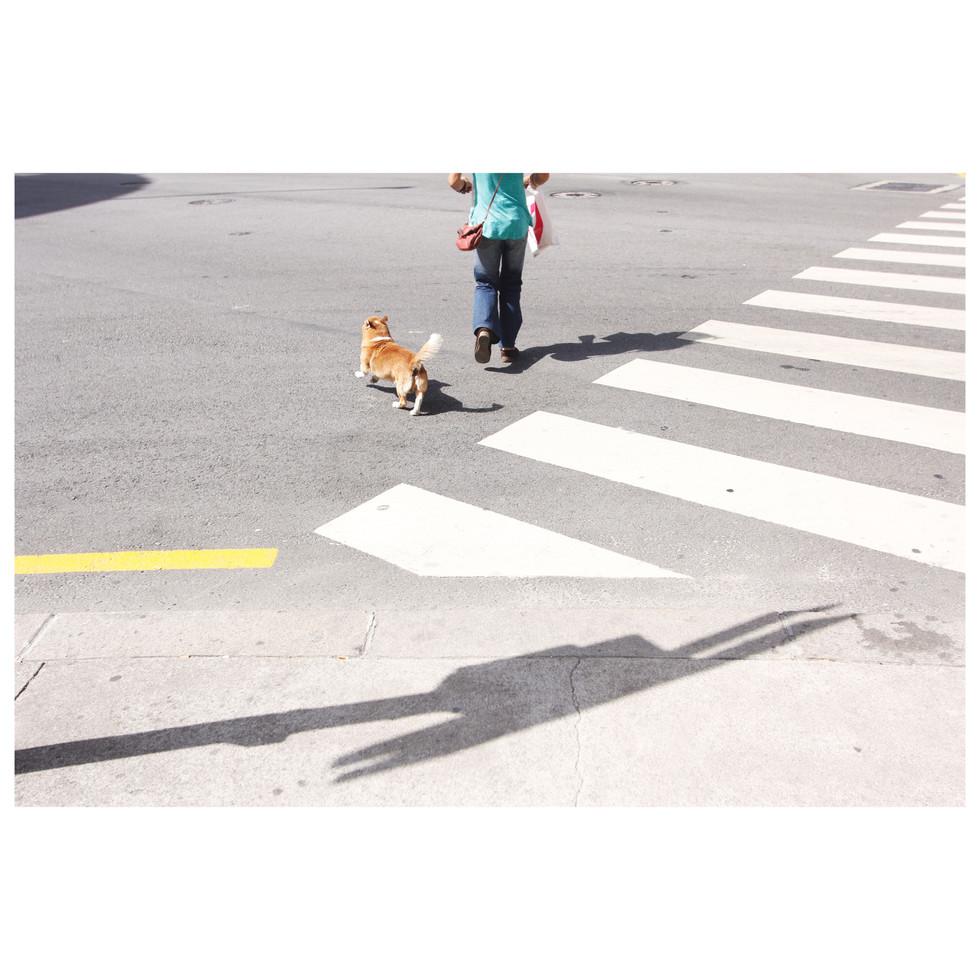 Proud dog walking