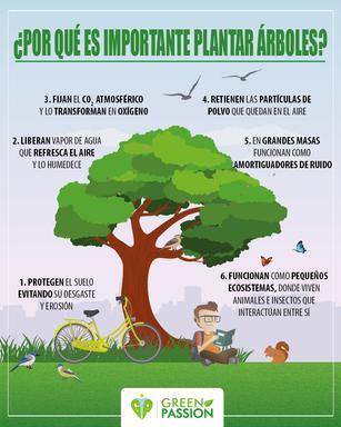 ¿Por qué es importante plantar árboles?