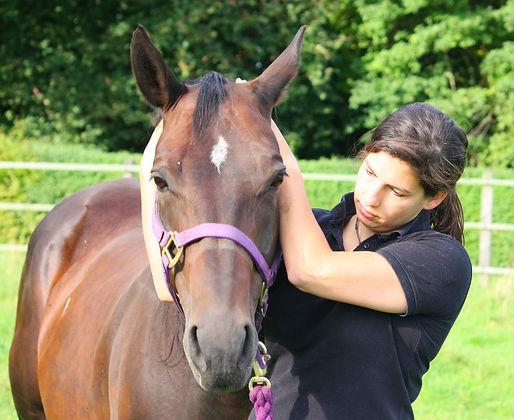Janna Buchwitz Pferdeosteopathie