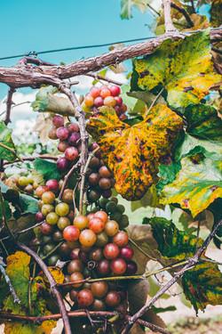 Island Grove Wine Company at Formosa Gardens | Kissimmee, Florida