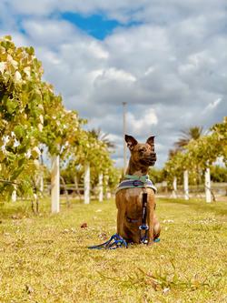 Dog Friendly Places Orlando, Florida