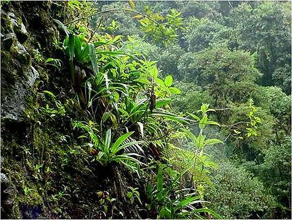Bermudez-CPO 2.jpg
