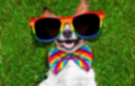 gay-dog.jpg