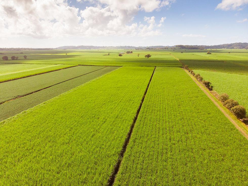 Plantação-Cana-de-Açúcar.jpg