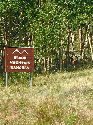 Black mountain ranch sign and deer.jpg