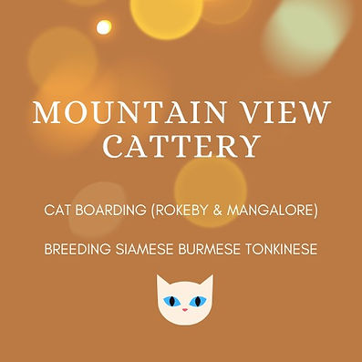 mountain%20view%20cattery%20Logo_edited.