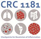 cropped-CRC1181_Logo_web.png