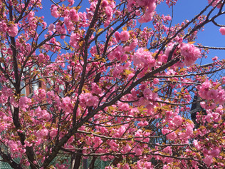 Spring Has Finally Sprung