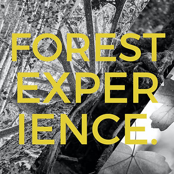 forest experience.001.jpeg