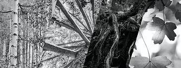 forest.004.jpeg