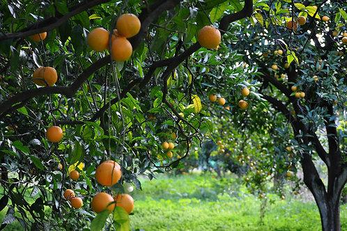 Yeşilbahçe Konakları: жилой комплекс премиум-класса в апельсиновых садах Обы