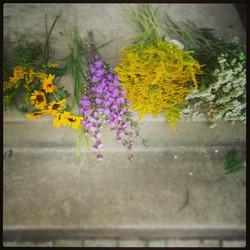 picked Kansas wildflowers