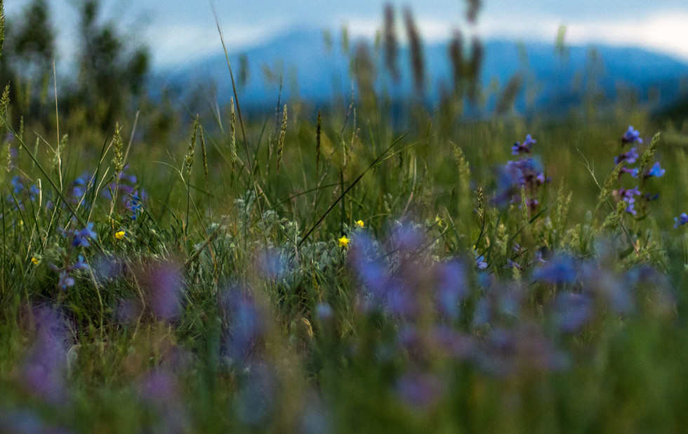 blue bells and mountains