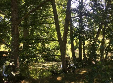 Sylvothérapie - 9 arbres qui nous font du bien