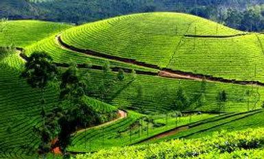 Serene Kerala - 12N/13D
