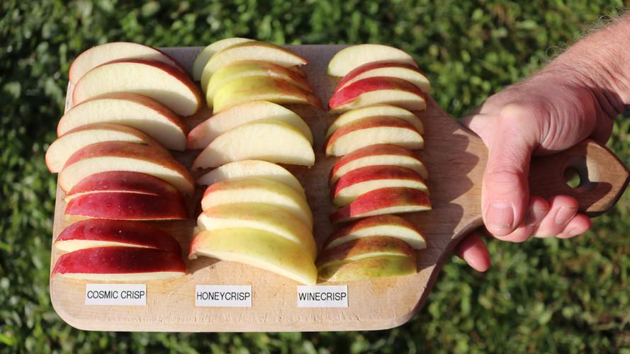 Slices of Apple Varieties
