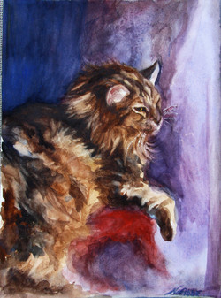 MAINE COON, MAX BY NANCY ABBE