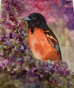Baltimore Oriole by Barbara Kikkot