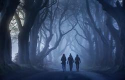 32448_Dark Hedges_ County Antrim