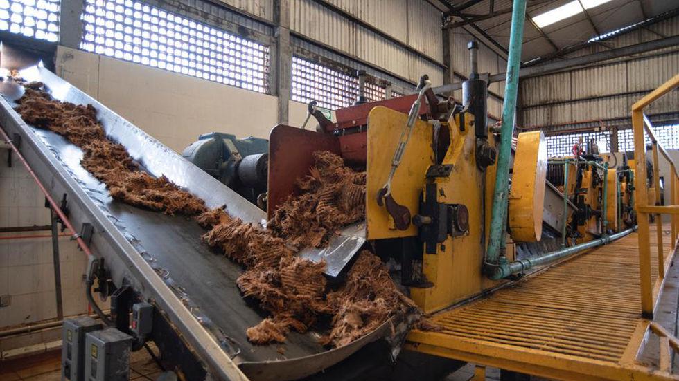 Pinas processing