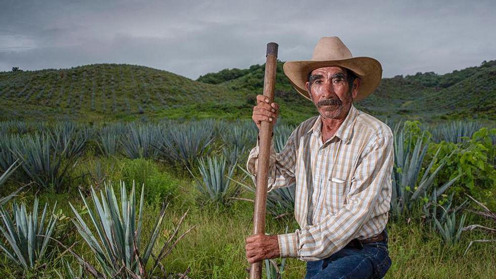 Agave farmer