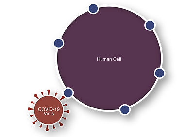 cell virus interaction covid