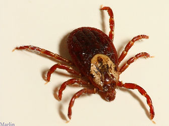 Lyme Disease (and others)