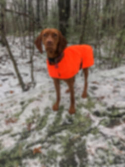 Moxie ready to hunt
