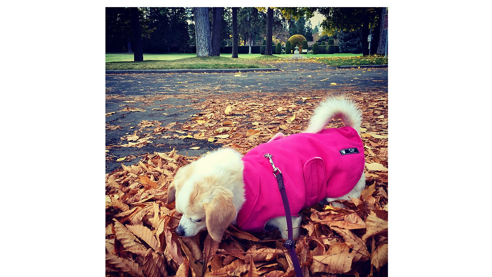 Insulated BundledUp Dog Coat