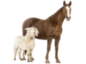 ZAMBA_konj.jpg