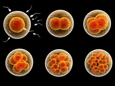 Embriotransfer - presajanje zarodkov pri kravah