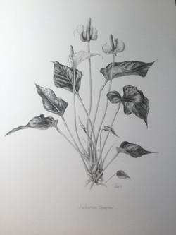 Karen West, Anthurium