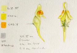 Flower colour study