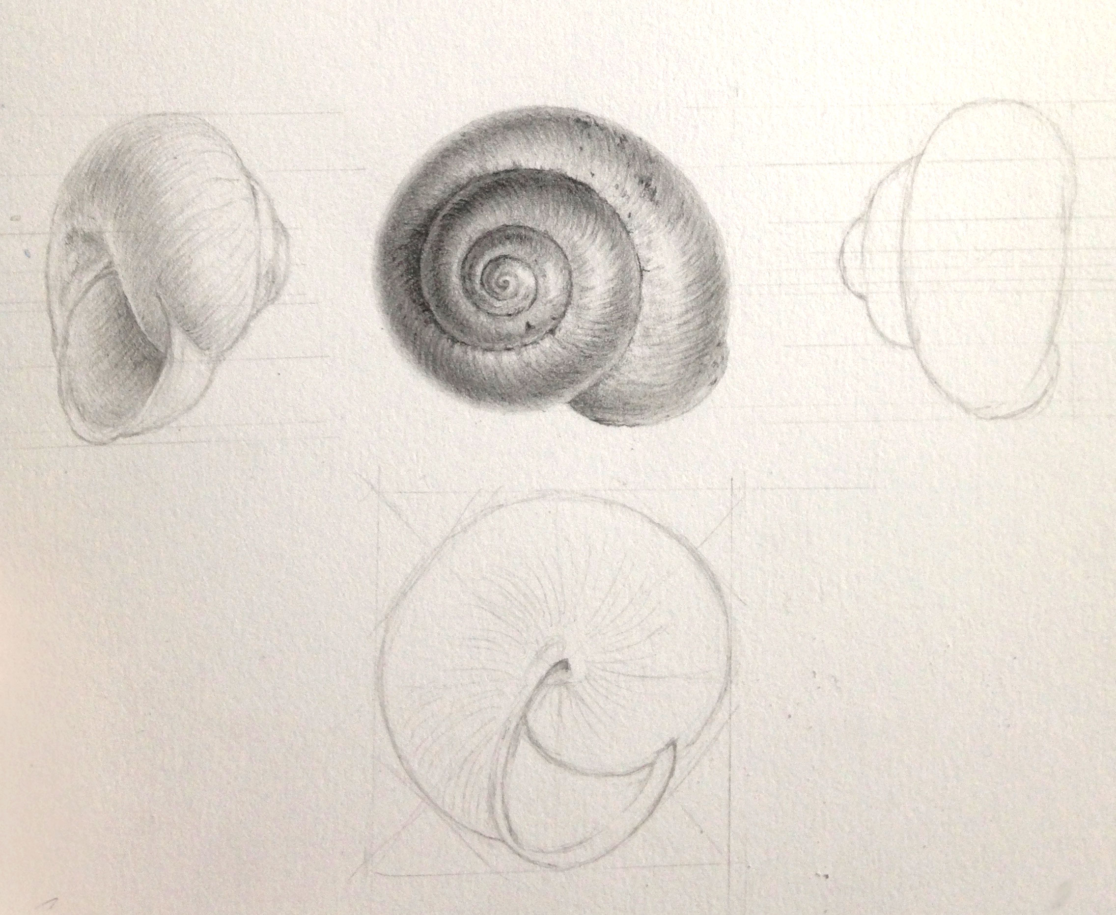 Measured drawing and tone
