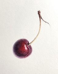 cherry 4.jpg