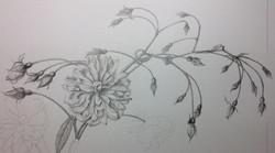 Detail in graphite Yvonne Sonsino