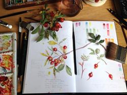 Colour study, week 4