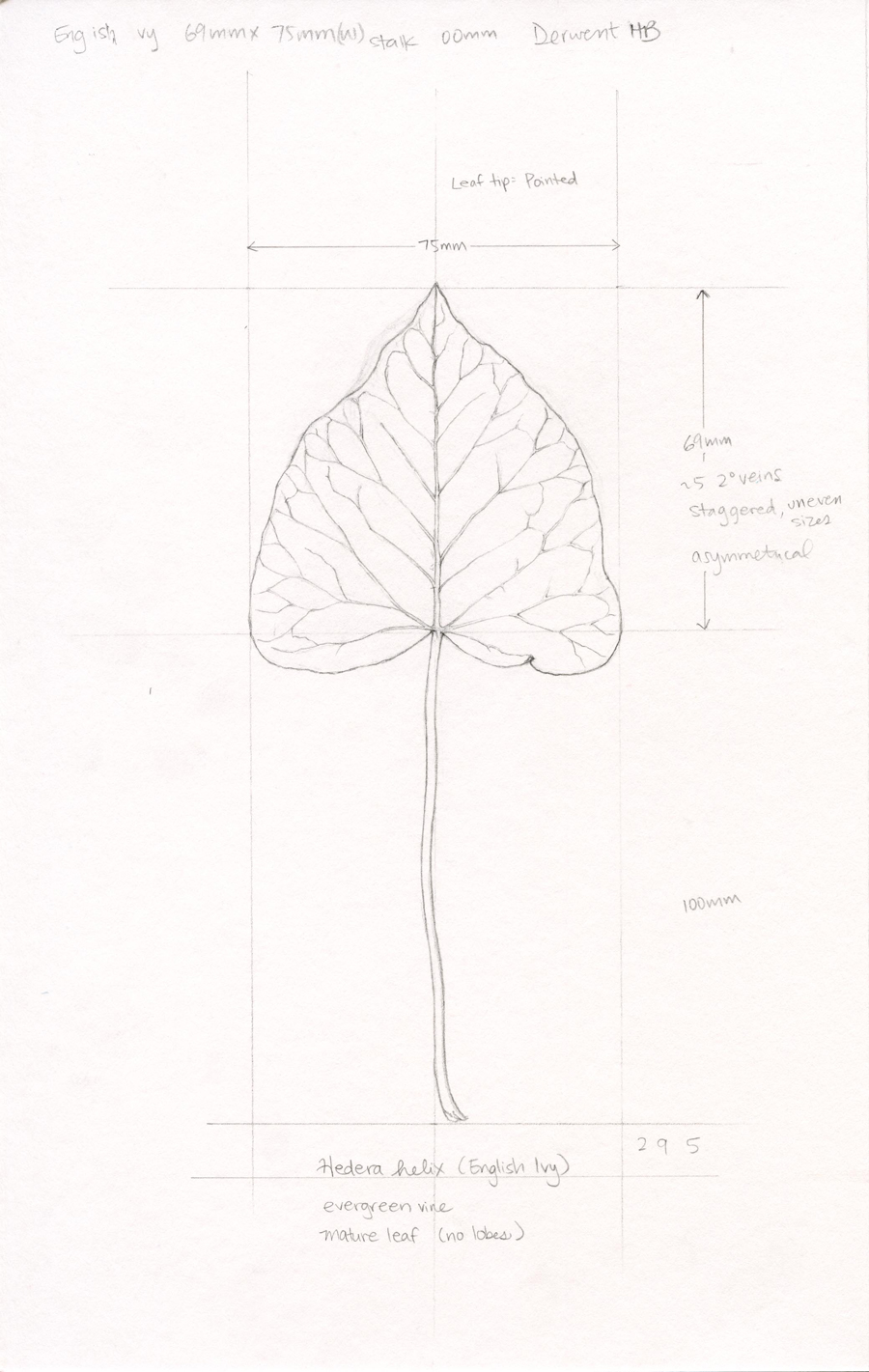 Leaf study by Ikumi Kayama