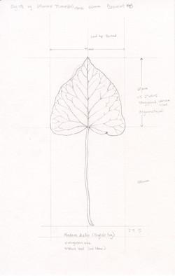 Leaf study by Ikumi Kayama