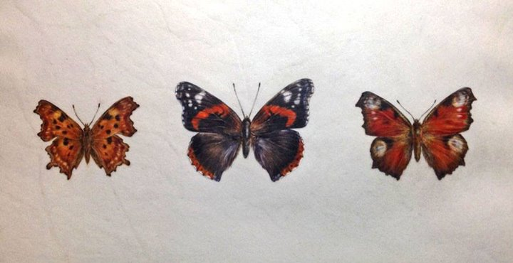 Original of 3 British butterflies