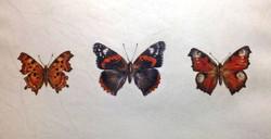 Original of 3 British butterflies
